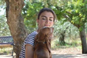 bracco italiano cuccioli